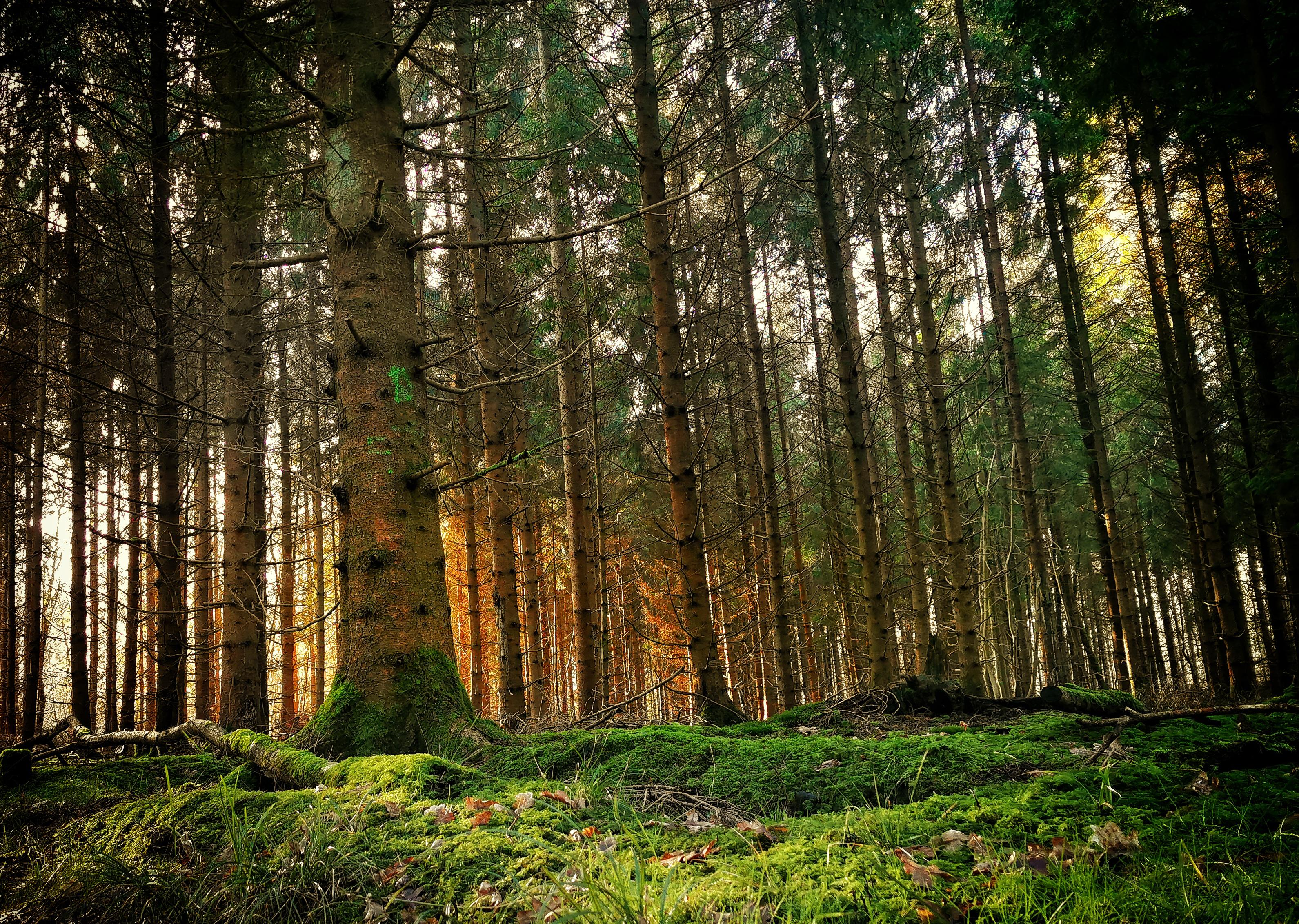 Just A Very Random Forest In The Uk Wallpaper Forest 4k Ultra Hd 3182x2264 Download Hd Wallpaper Wallpapertip