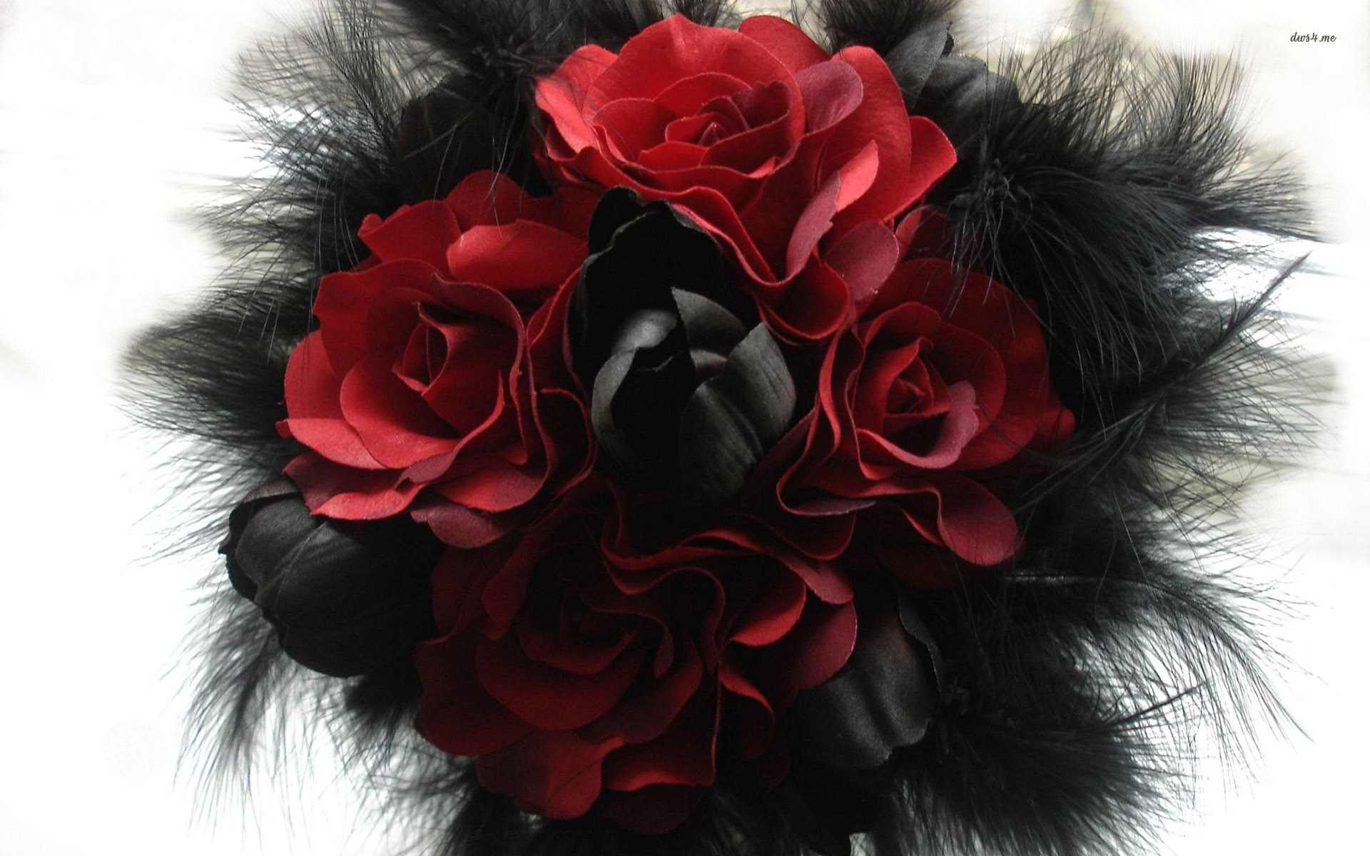 Black Rose Backgrounds For Free Wallpaper Black And Red Combination Rose 1920x1200 Download Hd Wallpaper Wallpapertip