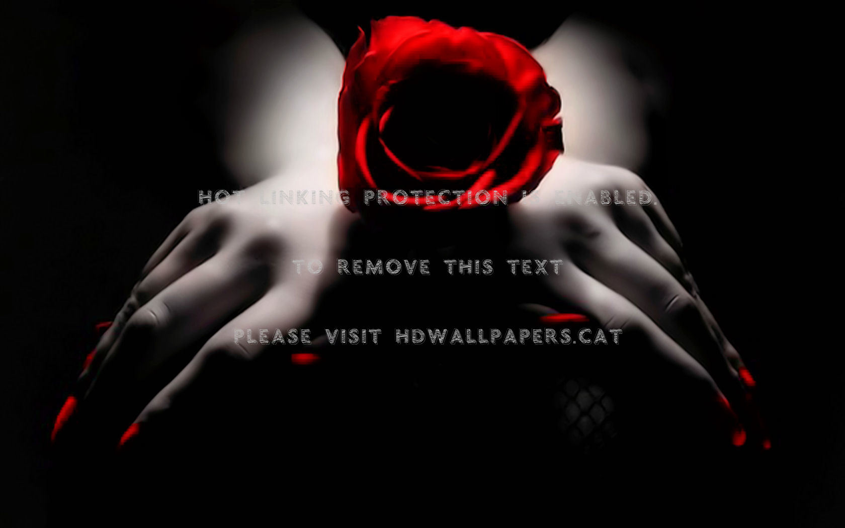 Black And White Red Roses Love Flower Background Black Red Rose 1680x1050 Download Hd Wallpaper Wallpapertip