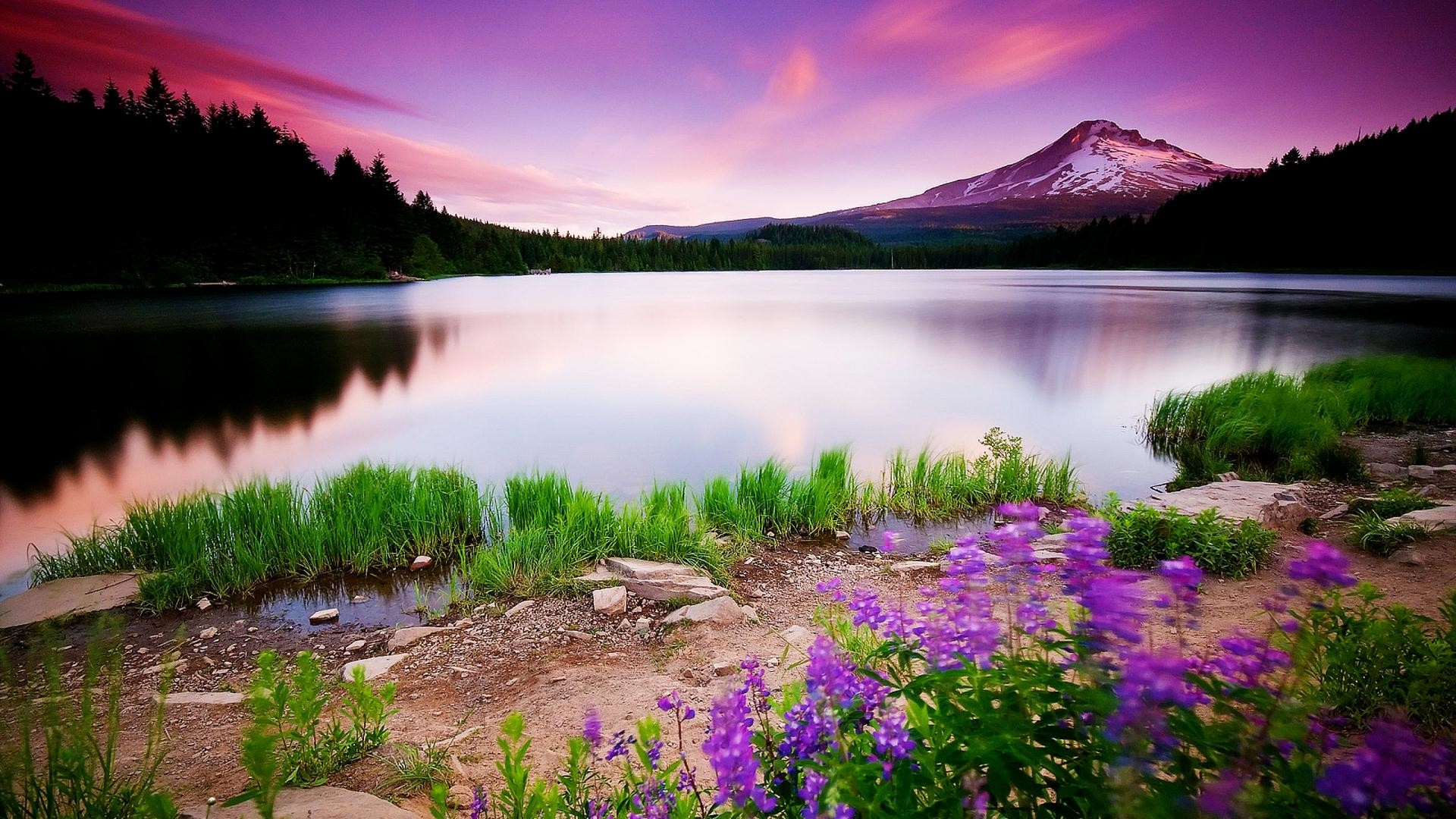 Nature Hd Wallpapers For Windows 10 - 1920x1080 - Download ...