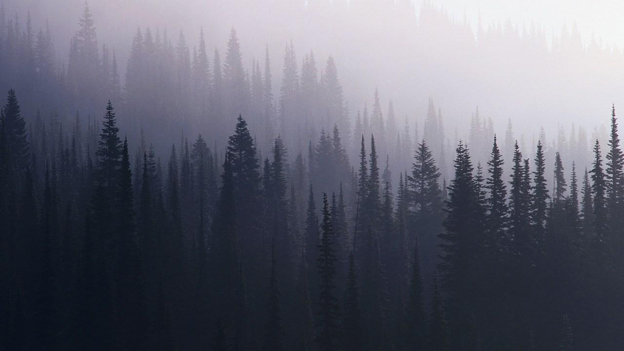 Desktop Backgrounds Tumblr Grunge Pine Trees 1280x720 Download Hd Wallpaper Wallpapertip