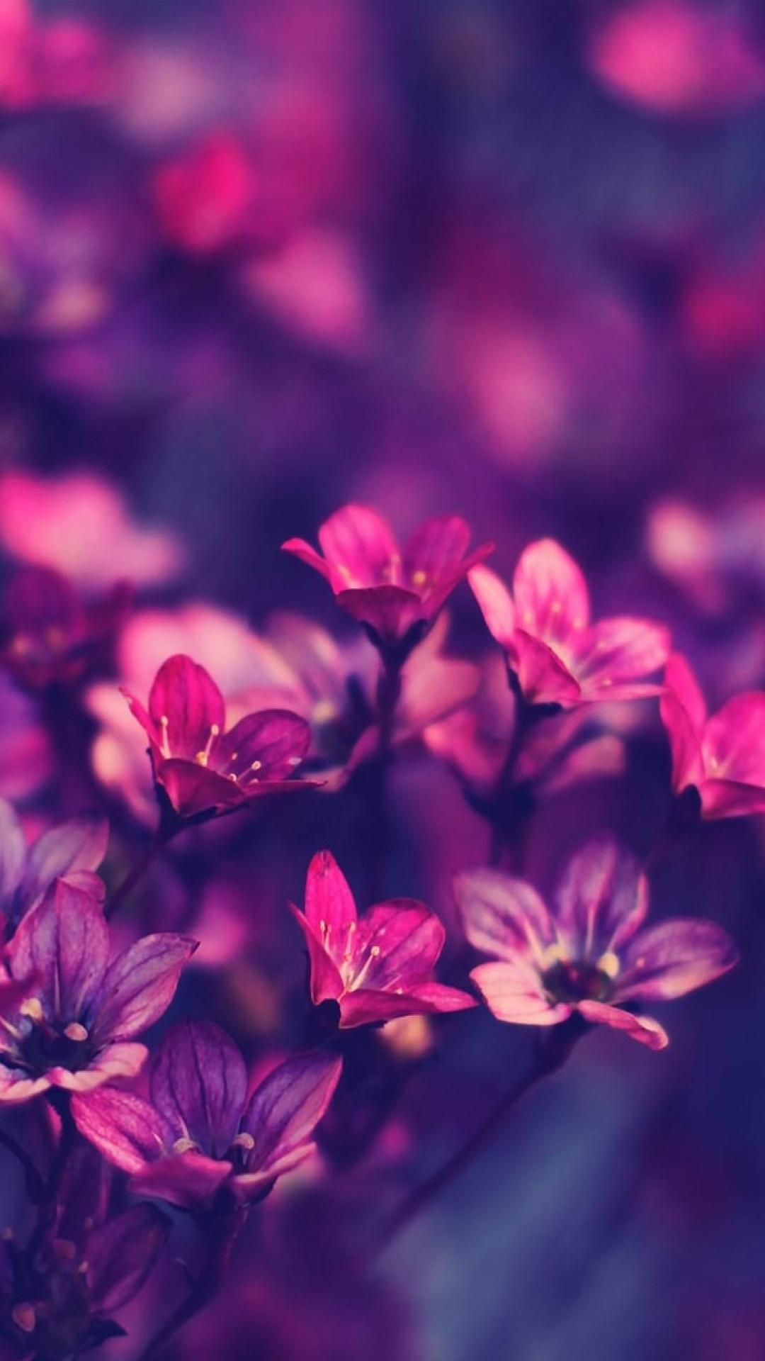 Samsung Galaxy J7 Wallpaper Download Full Size Flowers Wallpaper Hd Download 1080x1920 Download Hd Wallpaper Wallpapertip