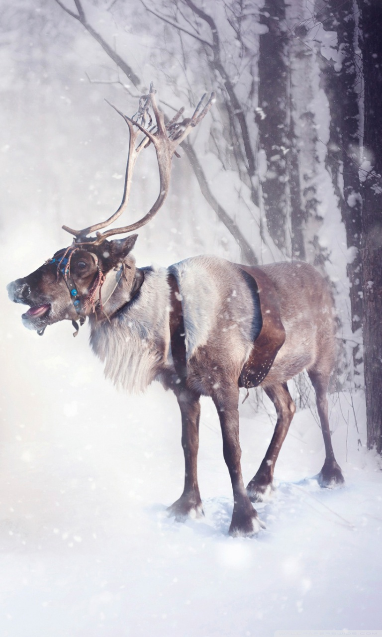 200 2000770 christmas reindeer wallpapers iphone