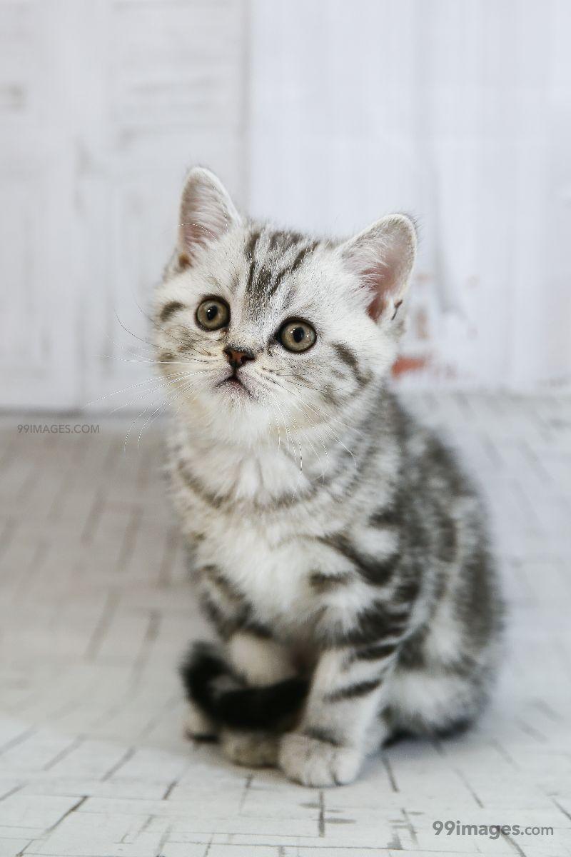 Best Cat Hd Photos Wallpapers Whatsapp Dp Status 800x1200 Download Hd Wallpaper Wallpapertip