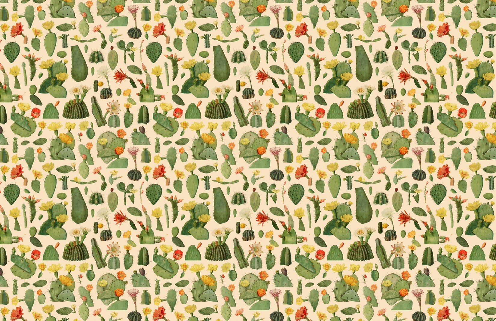 Green Cactus Succulent Pattern Wallpaper Mural 1650x1070 Download Hd Wallpaper Wallpapertip