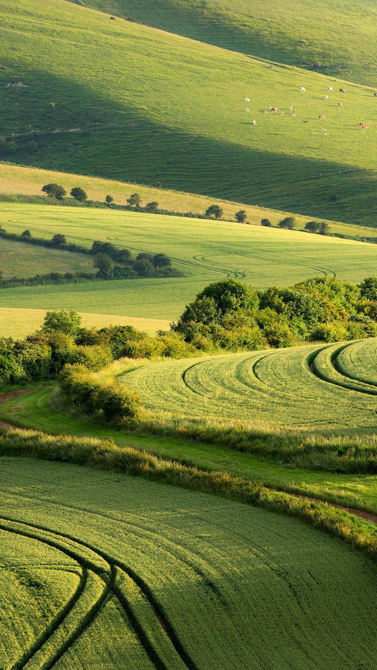 Beautiful Green Natural Scenery 2 Iphone 6 Wallpaper 750x1334 Download Hd Wallpaper Wallpapertip