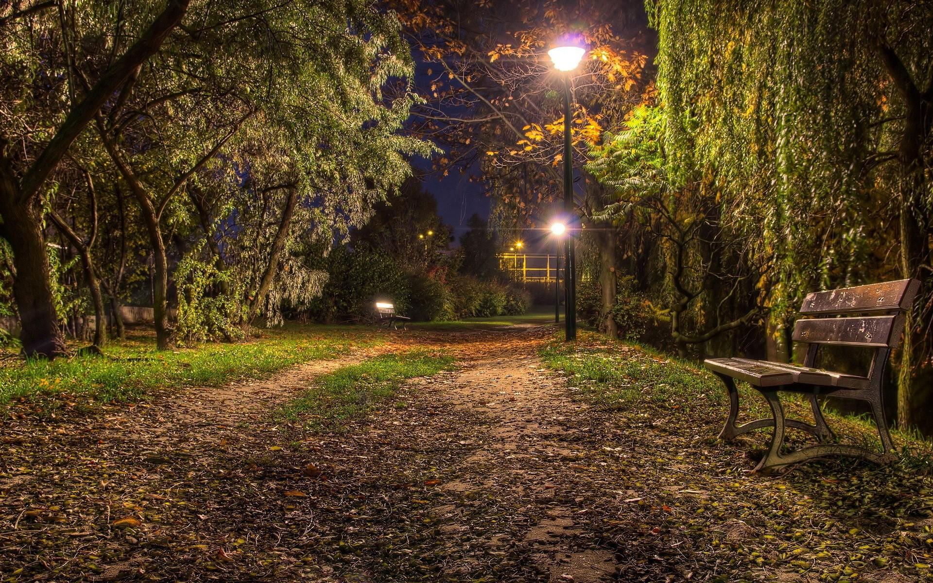 Nature Night Bench Wallpaper 1920x1200 Download Hd Wallpaper Wallpapertip