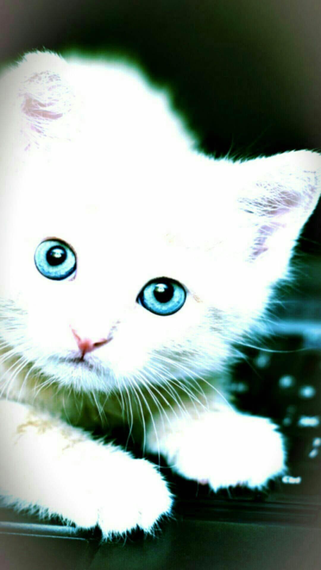 Wallpaper Kucing Lucu Bergerak Gif 1080x1920 Download Hd Wallpaper Wallpapertip