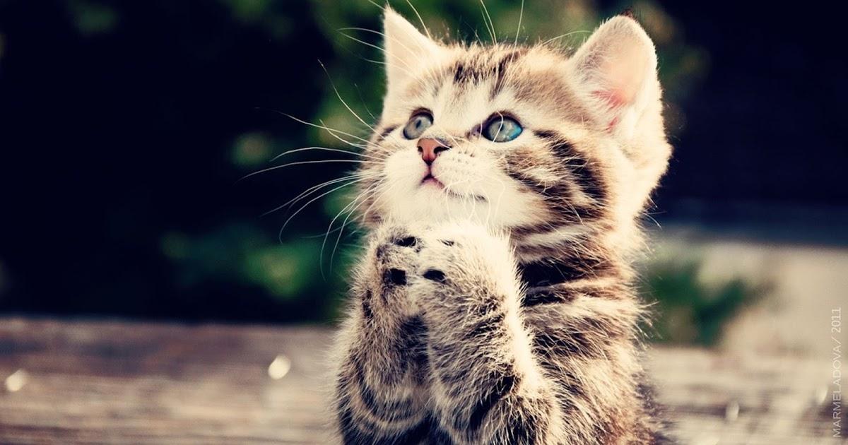 Trending Hari Ini Wallpaper Kucing Lucu Dan Imut 1200x630 Download Hd Wallpaper Wallpapertip