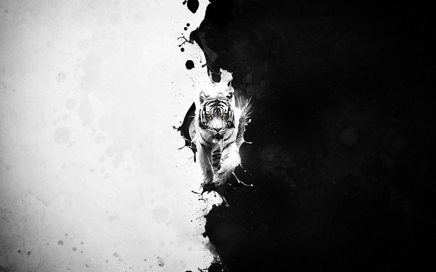 Black And White Tiger Wallpaper 1680x1050 Download Hd Wallpaper Wallpapertip