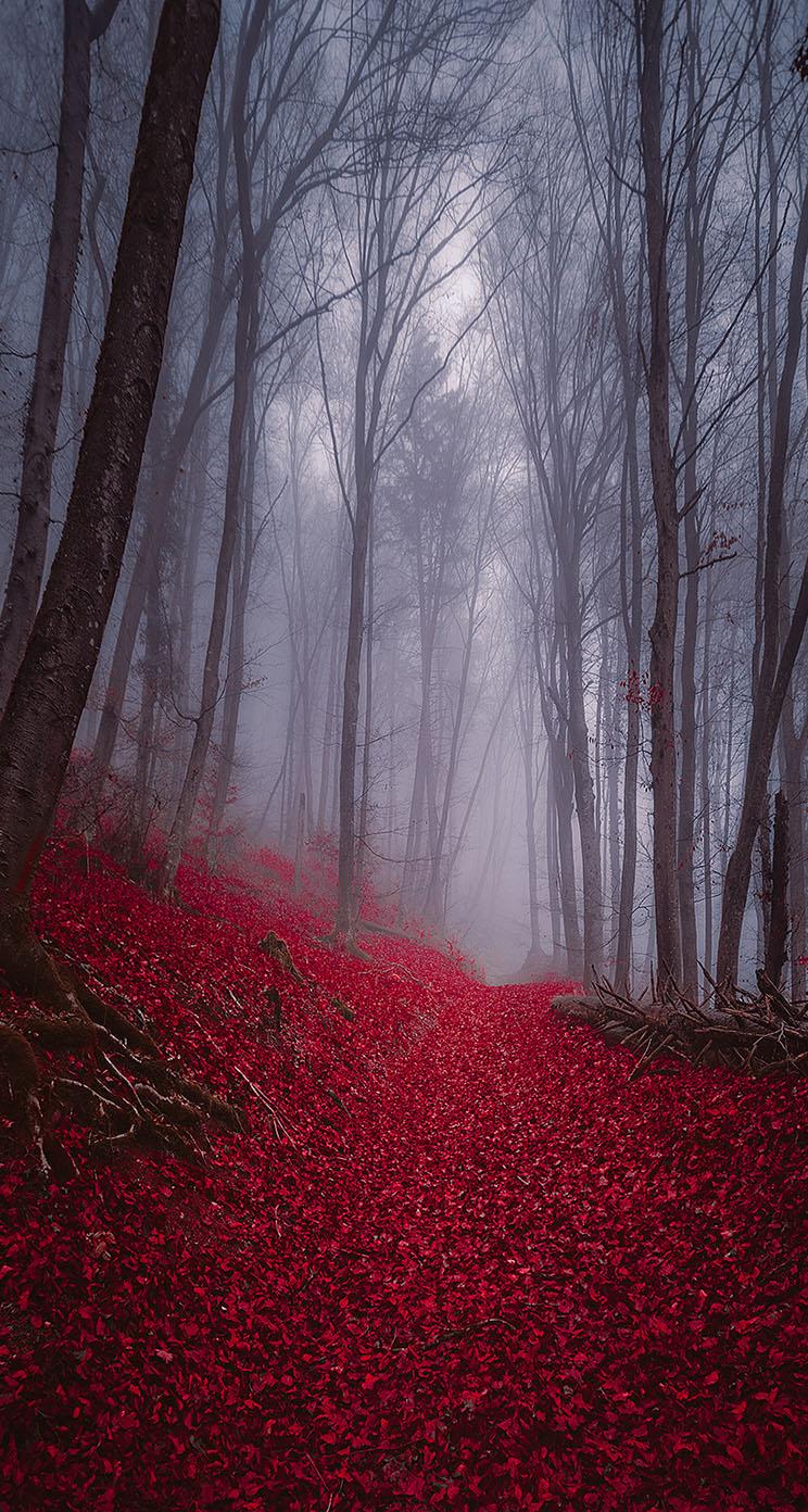 Foggy Forest Iphone Wallpaper 744x1392 Download Hd Wallpaper Wallpapertip