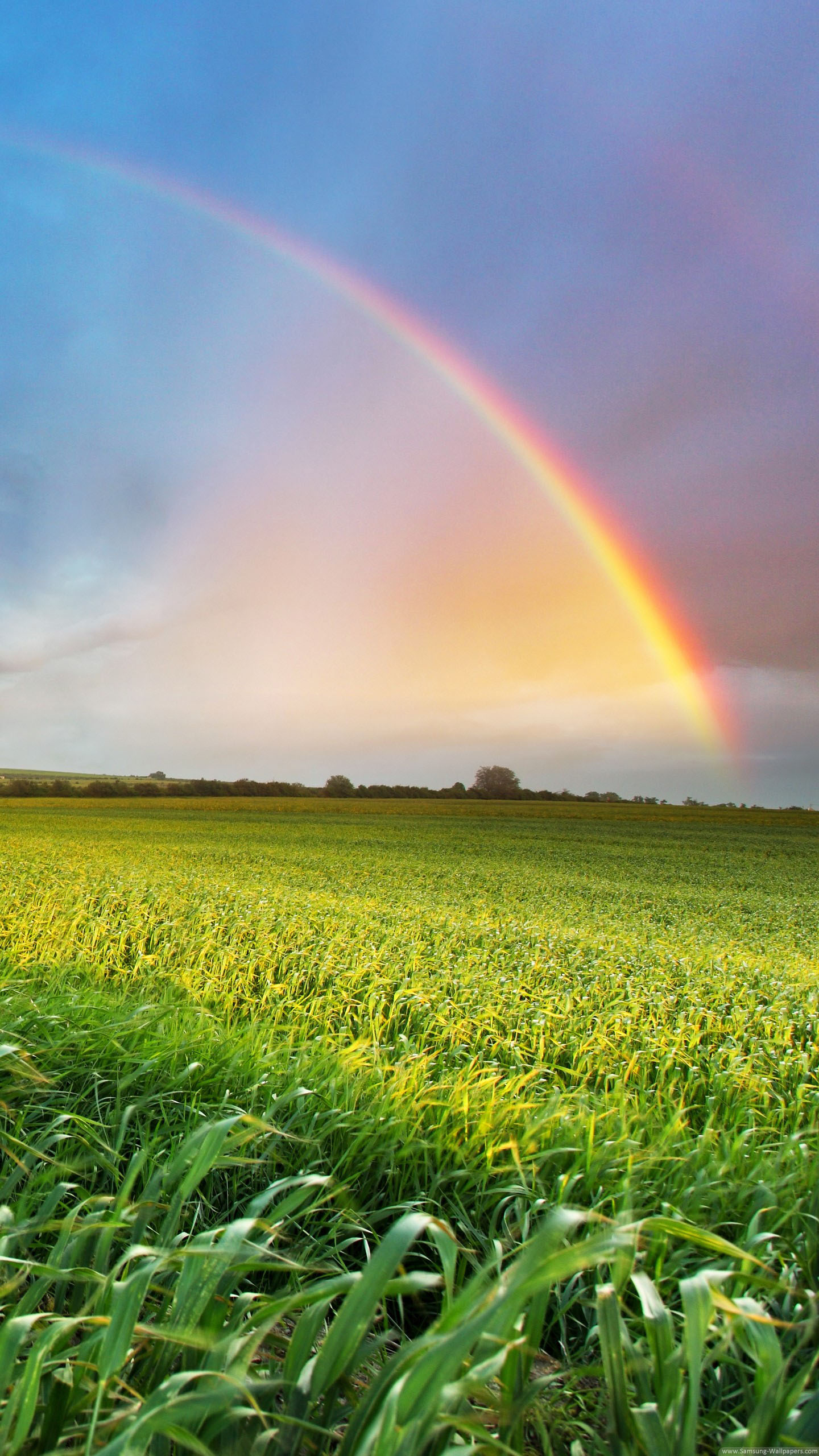 Samsung Galaxy Home Screen Wallpaper Rainbow Passage 1440x2560 Download Hd Wallpaper Wallpapertip