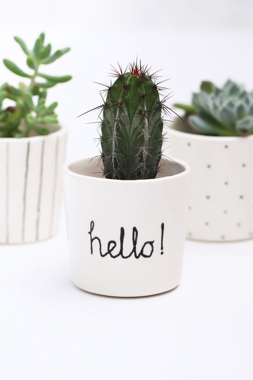 Cute Cactus Decor Ideas For Your Home   20x20   Download HD ...