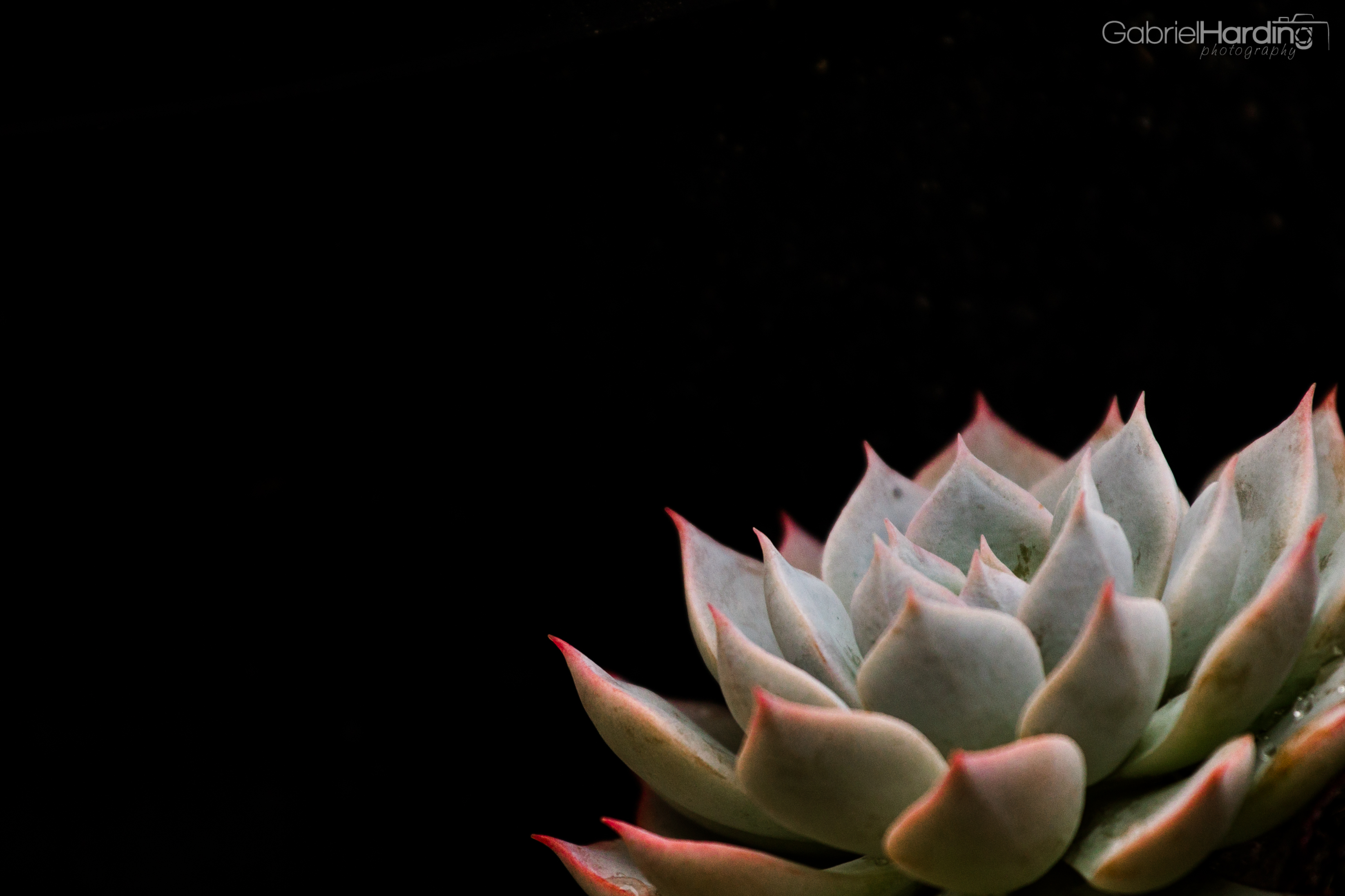 Succulent Desktop Wallpaper 3293x2195 Download Hd Wallpaper Wallpapertip