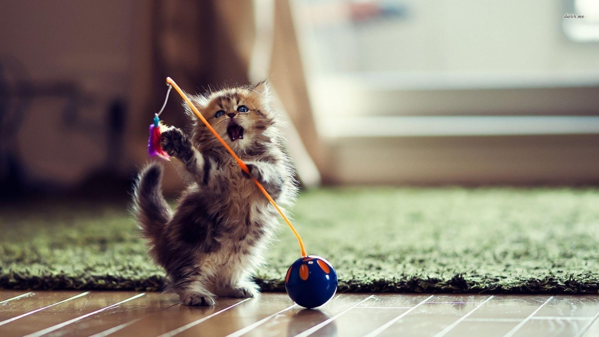 Gorgeous Cute Kitten Wallpapers For Desktop Kitten 1920x1080 Download Hd Wallpaper Wallpapertip