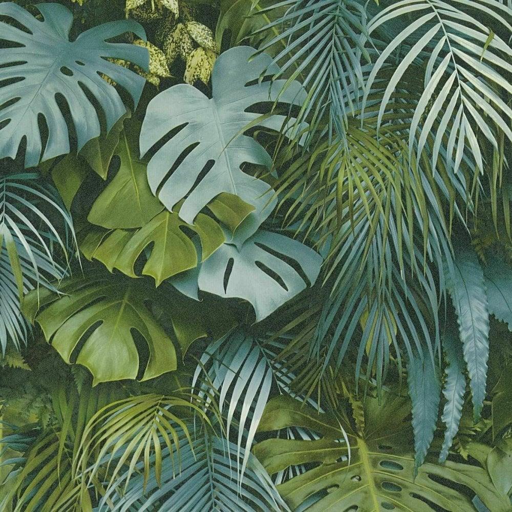 Palm Wallpaper Uk 1000x1000 Download Hd Wallpaper Wallpapertip