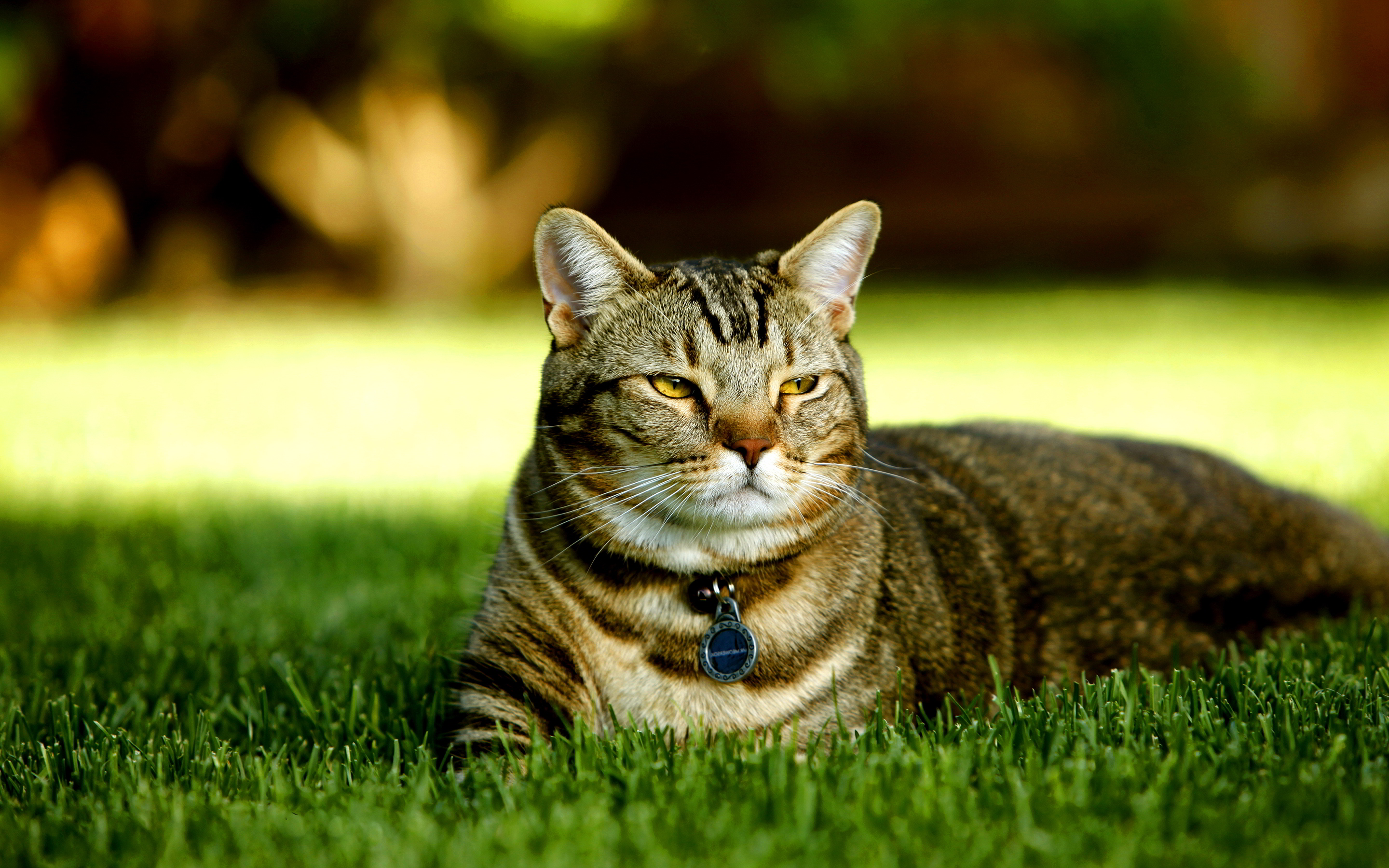 Cute Cat In Grass 2880x1800 Download Hd Wallpaper Wallpapertip