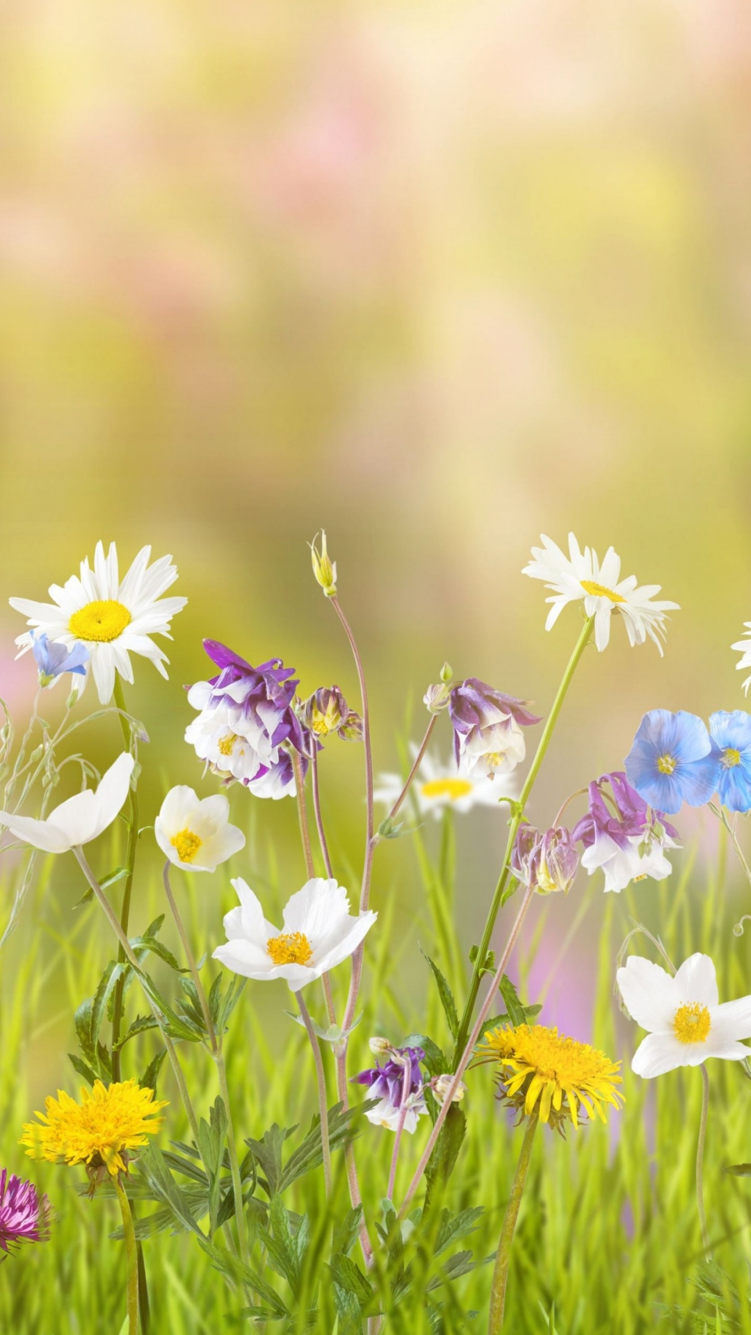 Samsung Flower Wallpaper 1080x1920 Download Hd Wallpaper Wallpapertip