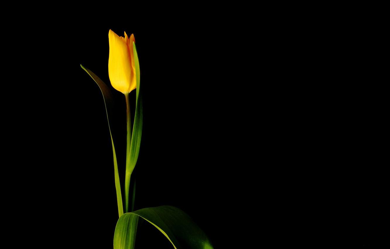 Photo Wallpaper Flower Minimalism Black Background 1332x850 Download Hd Wallpaper Wallpapertip