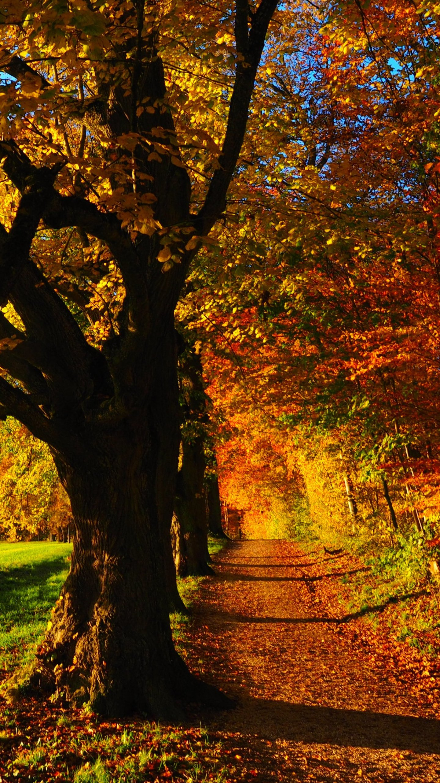 Herbst Wald Wallpaper Telefon Herbst Wallpaper Fur Android 1440x2560 Wallpapertip