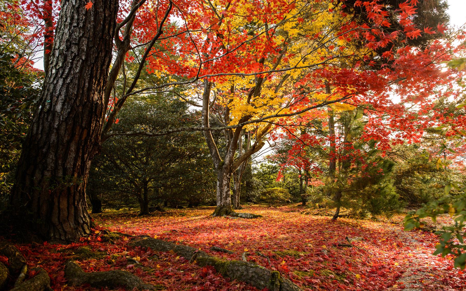 Fall Colors Desktop Wallpaper Wwwwallpapers In Hdcom Fall Scenes 2880 1800x1125 Download Hd Wallpaper Wallpapertip