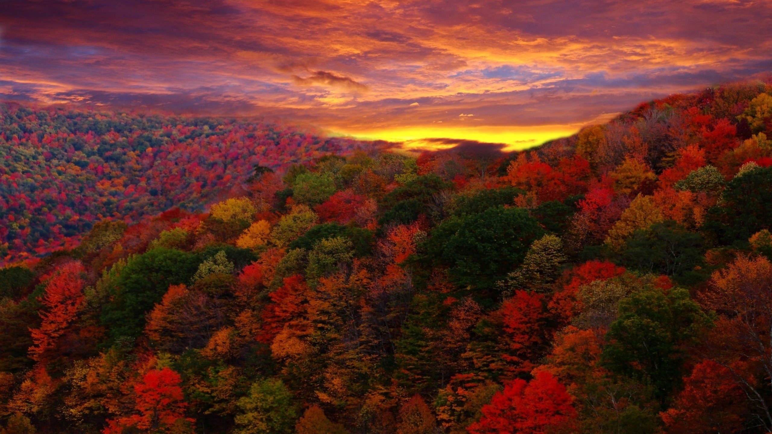 Wallpaper Toamna Incanta Privitorul Fall Season New England 2560x1440 Download Hd Wallpaper Wallpapertip