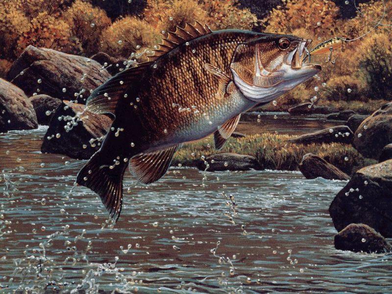 Go Back Gallery For Largemouth Bass Wallpaper For Desktop Smallmouth Bass Fishing Background 800x600 Download Hd Wallpaper Wallpapertip