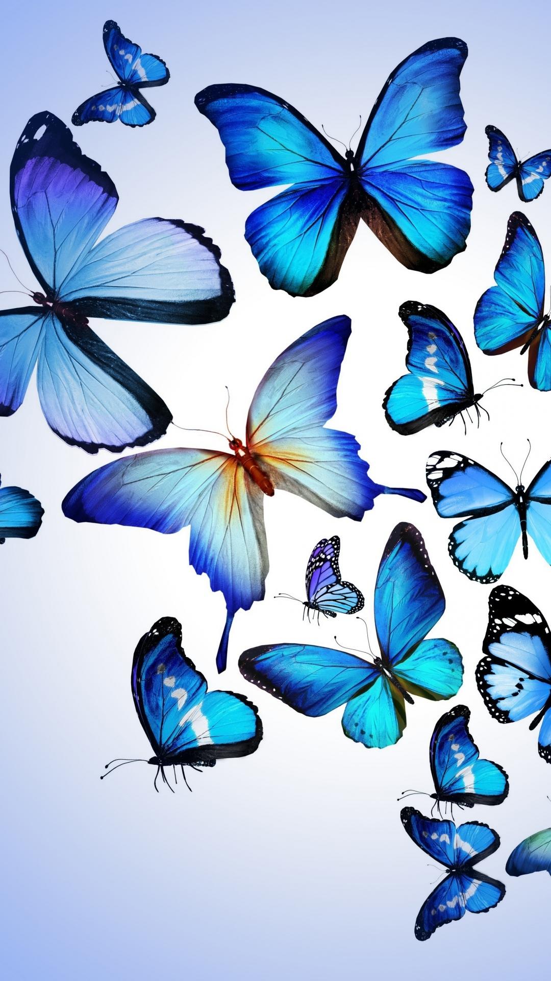 Hd Blue Butterflies Iphone Wallpaper Resolution Blue Butterfly Iphone 11 Case 1080x1920 Download Hd Wallpaper Wallpapertip