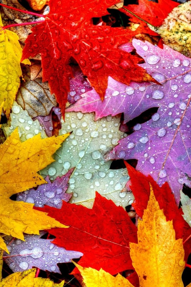 Fall Leaves Wallpaper Iphone 640x960 Download Hd Wallpaper Wallpapertip