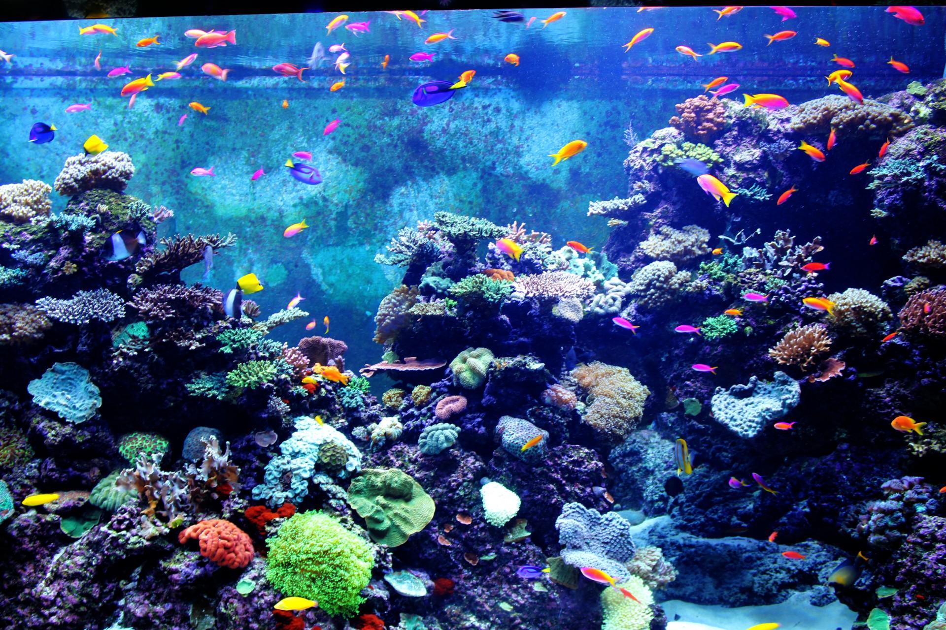 Aquarium Wallpaper Free Download 1920x1280 Download Hd Wallpaper Wallpapertip