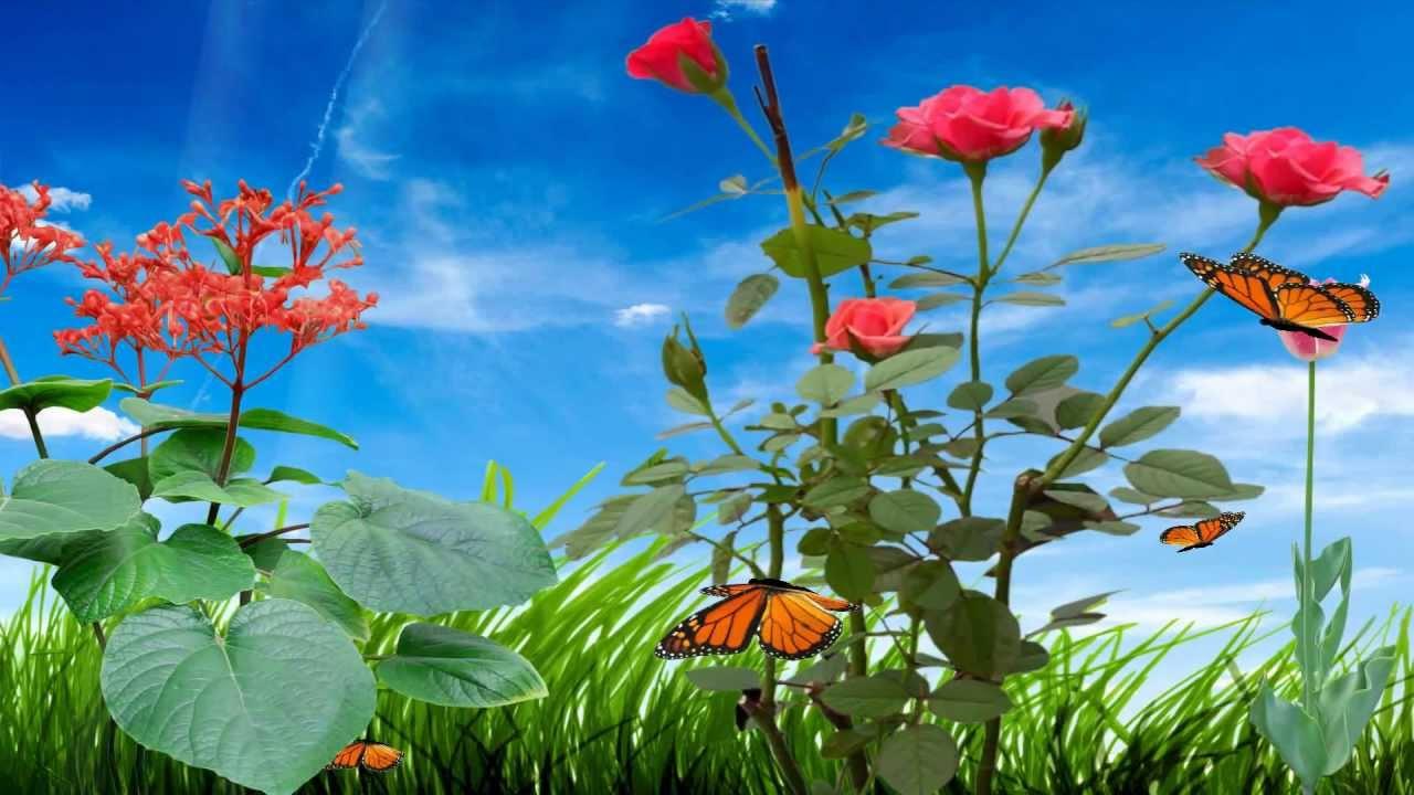 flor fondos de pantalla animado gif - papel tapiz de flores en movimiento -  1280x720 - WallpaperTip