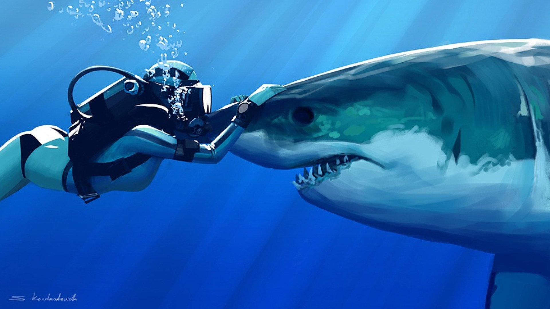 Bureau De Requin Fond D Ecran K Pek 1920x1080 Wallpapertip