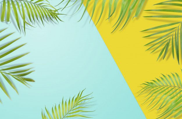 Minimalist Tropical Leaves Background 626x409 Download Hd Wallpaper Wallpapertip