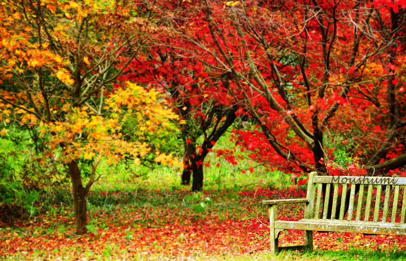 November Desktop Backgrounds Autumn Wallpaper Nature November 1600x1032 Download Hd Wallpaper Wallpapertip