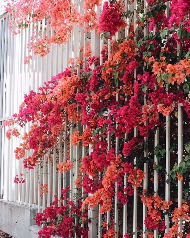 100 Beautiful Flower Iphone Wallpaper Ideas Flower Iphone Wallpaper Flower Aesthetic 640x800 Download Hd Wallpaper Wallpapertip