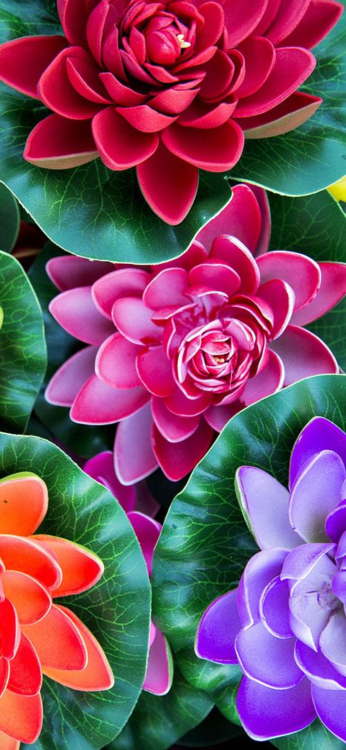 Sfondi Floreali Per Iphone Fiore Sfondi Iphone 500x1083 Wallpapertip