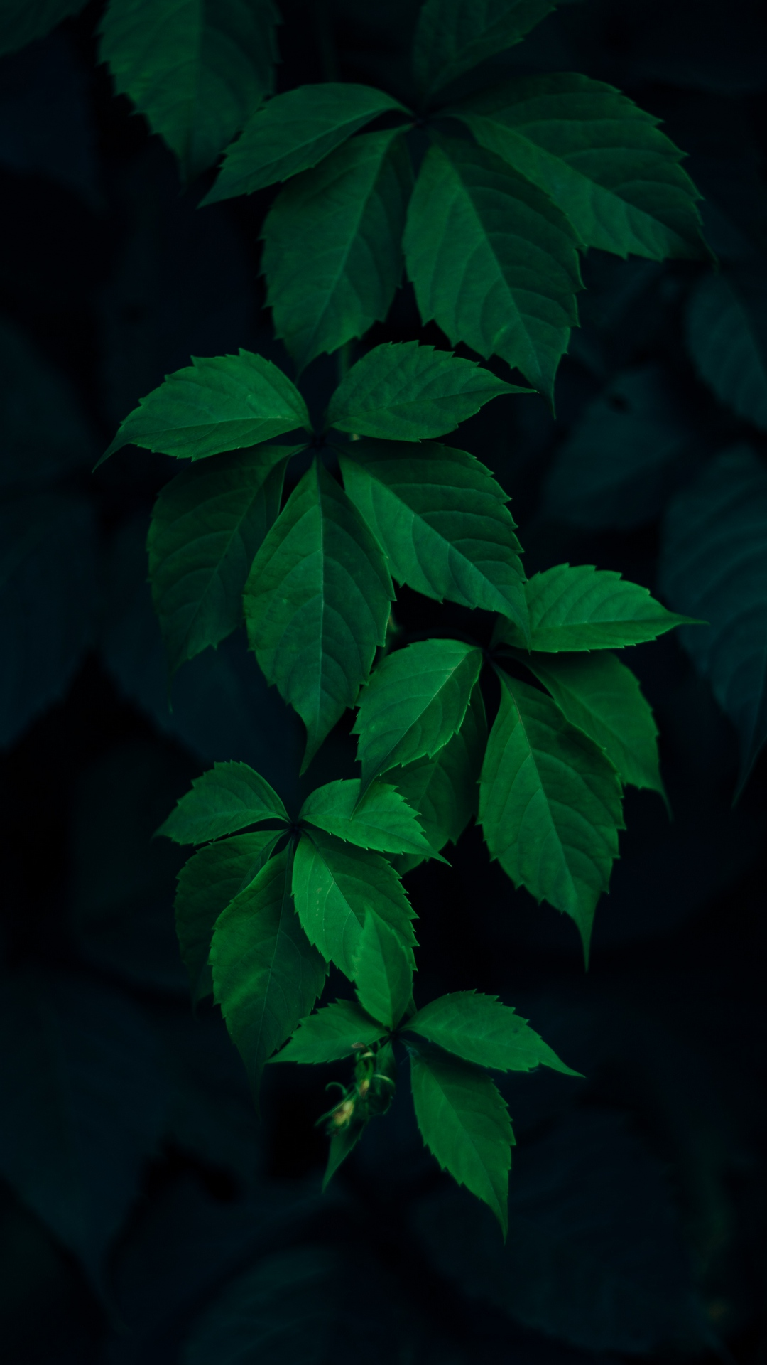 Leaves Green Branches Dark Wallpaper Iphone Leaves Background 1080x1920 Download Hd Wallpaper Wallpapertip
