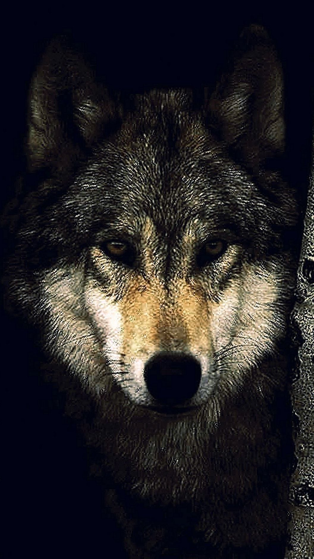 3 34893 black wolf wallpapers wolf hd