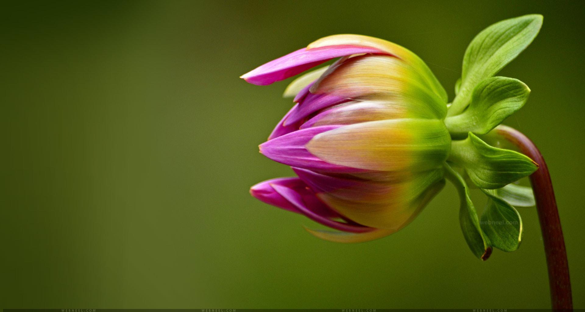 Flower Wallpaper Beautiful Best Hd Best Flower Images Hd 1920x1024 Download Hd Wallpaper Wallpapertip