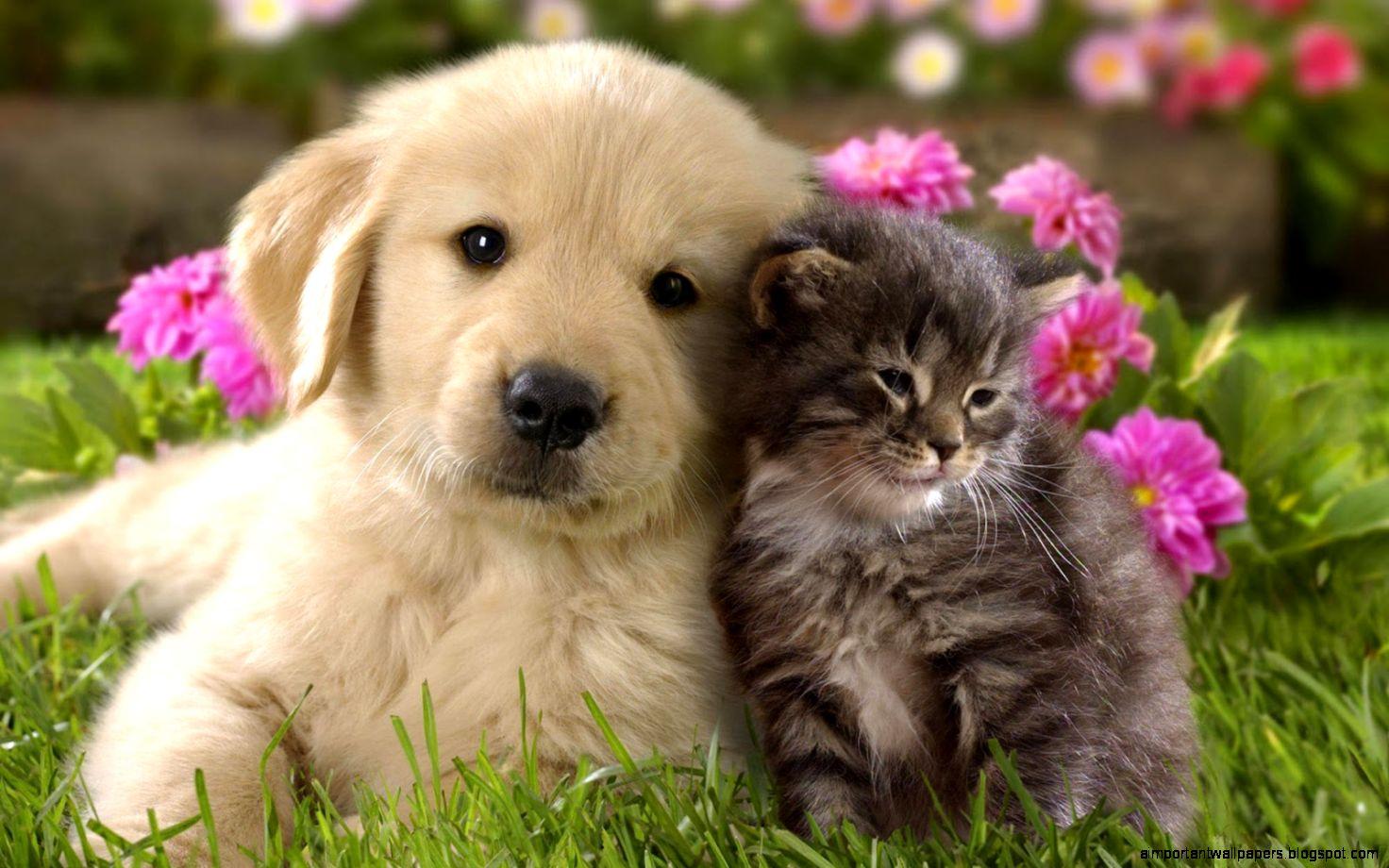 Süße tiere hintergrundbilder Beste Hintergrund: