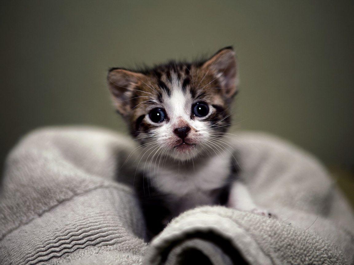 Cute Baby Cats Hd - 800x600 - Download HD Wallpaper - WallpaperTip