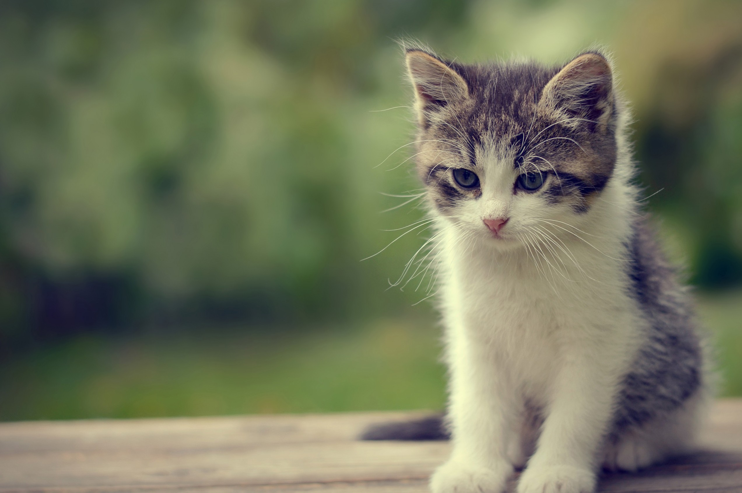 Cute Cat Wallpapers Hd 2545x1692 Download Hd Wallpaper Wallpapertip
