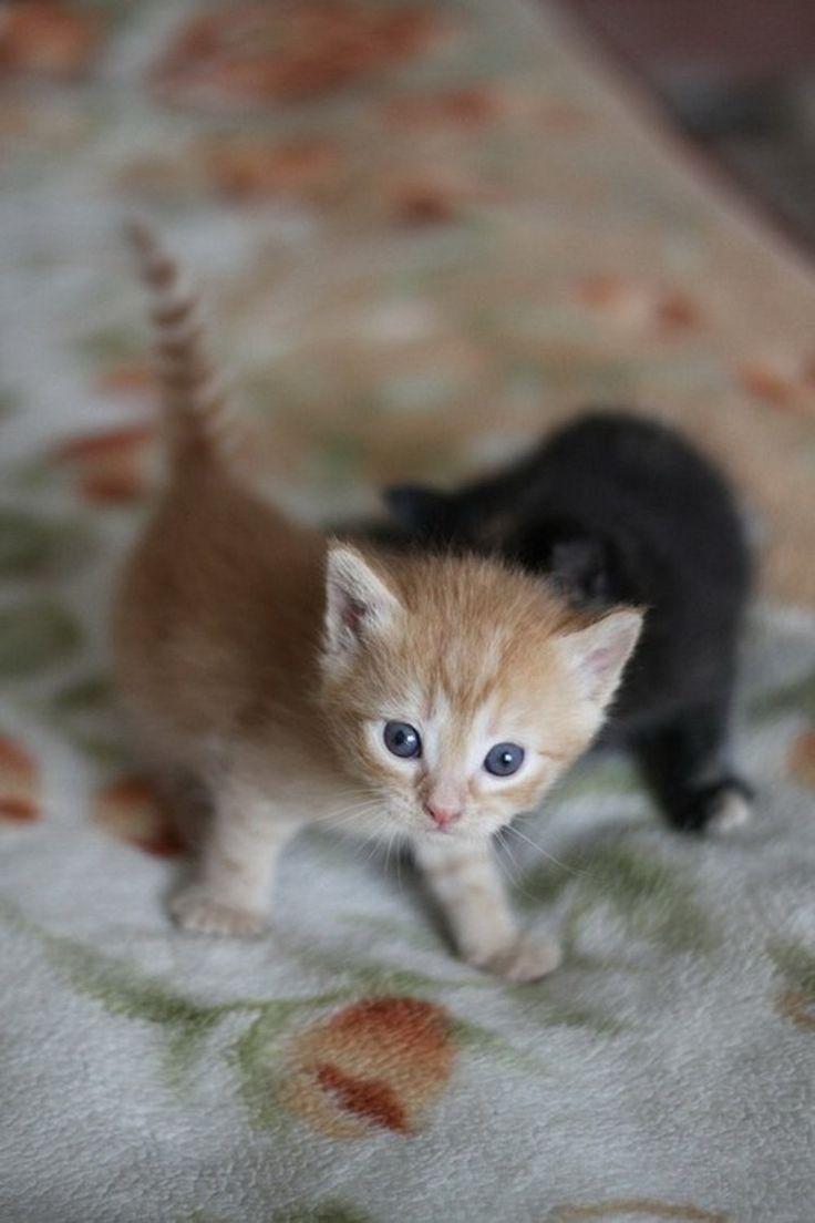 Kitten Super Cute Baby Cat 736x1104 Download Hd Wallpaper Wallpapertip