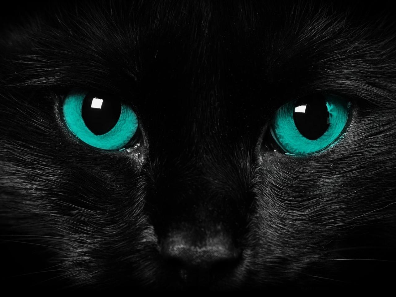 Black Cat Blue Eyes Cat Wallpaper Black Cat Blue Eyes 1280x960 Download Hd Wallpaper Wallpapertip