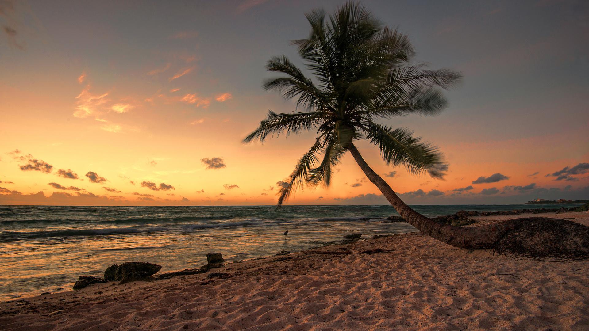Image For Beach Dream Night Wallpaper 1920x1080 Download Hd Wallpaper Wallpapertip