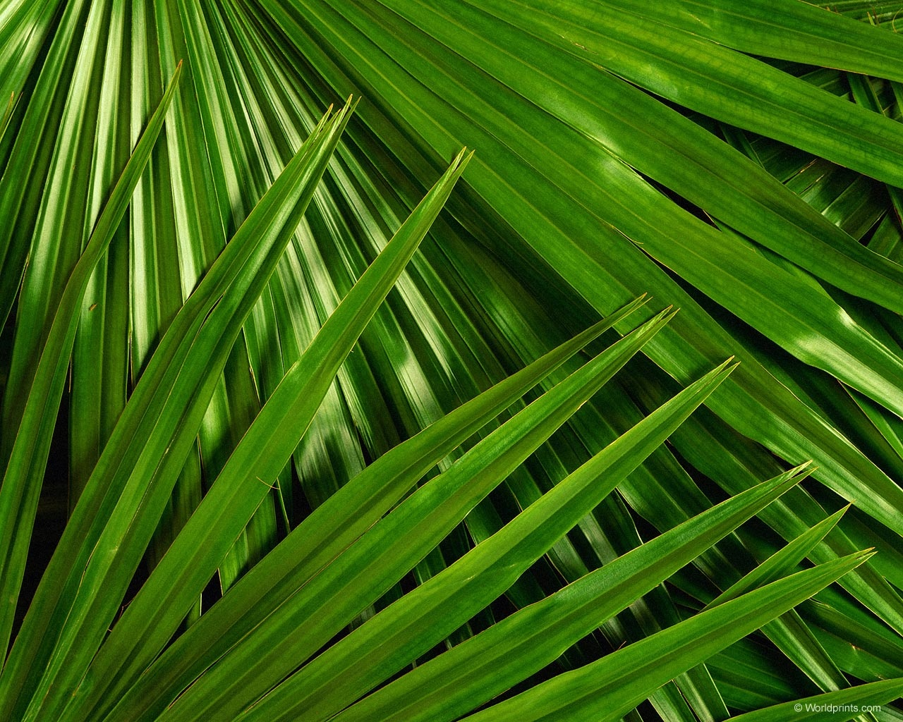 Palm Leaves Wallpapersuggestcom Wallpapers Palm Branch Palm Sunday Background 1280x1024 Download Hd Wallpaper Wallpapertip