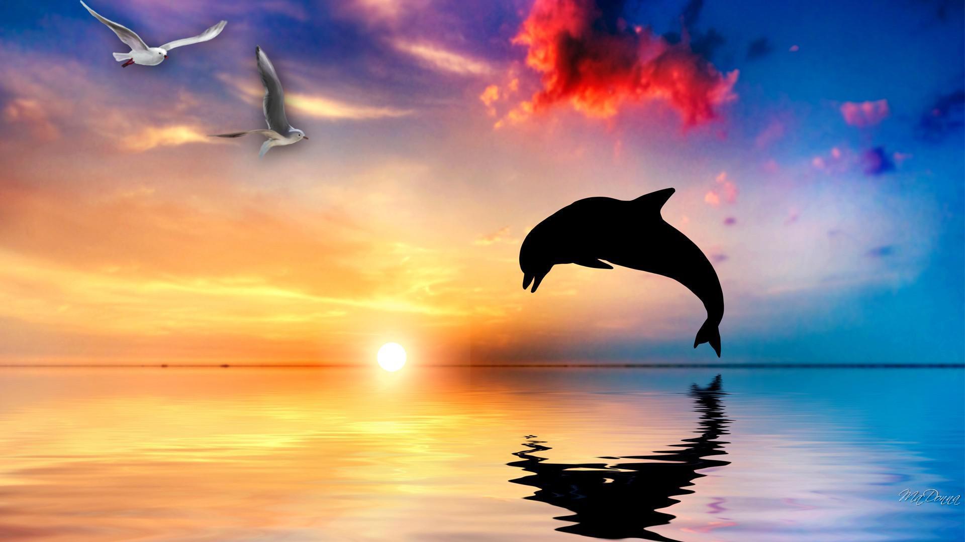 美しい海とイルカのジャンプと夕日 ピンクのイルカの壁紙 19x1080 Wallpapertip