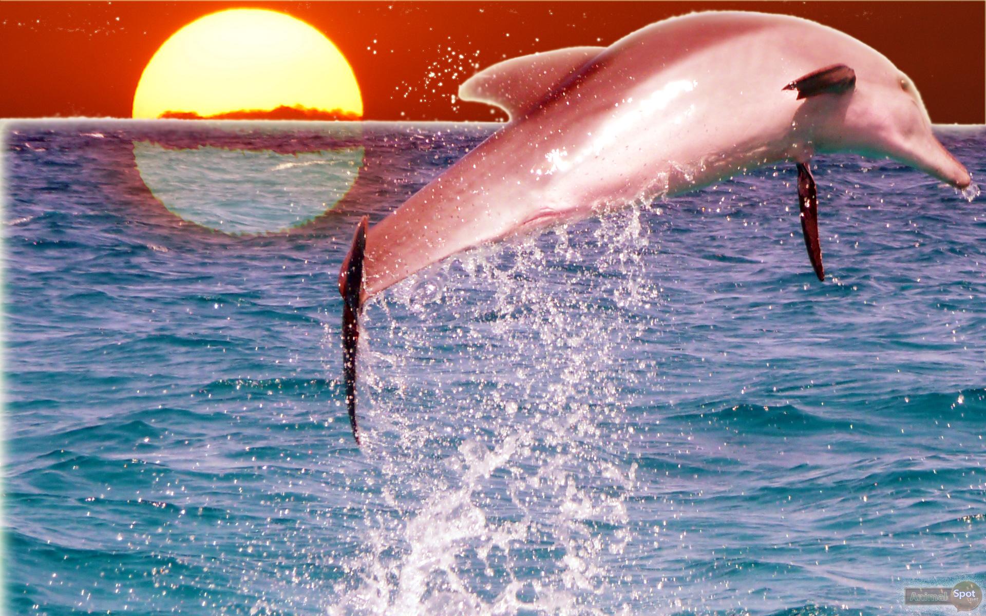 海のイルカ イルカの壁紙無料 19x10 Wallpapertip