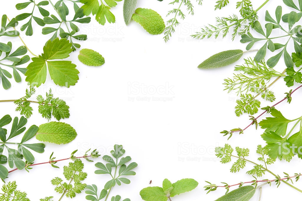 Frame Of Herbal Leaves In White Background 1024x682 Download Hd Wallpaper Wallpapertip