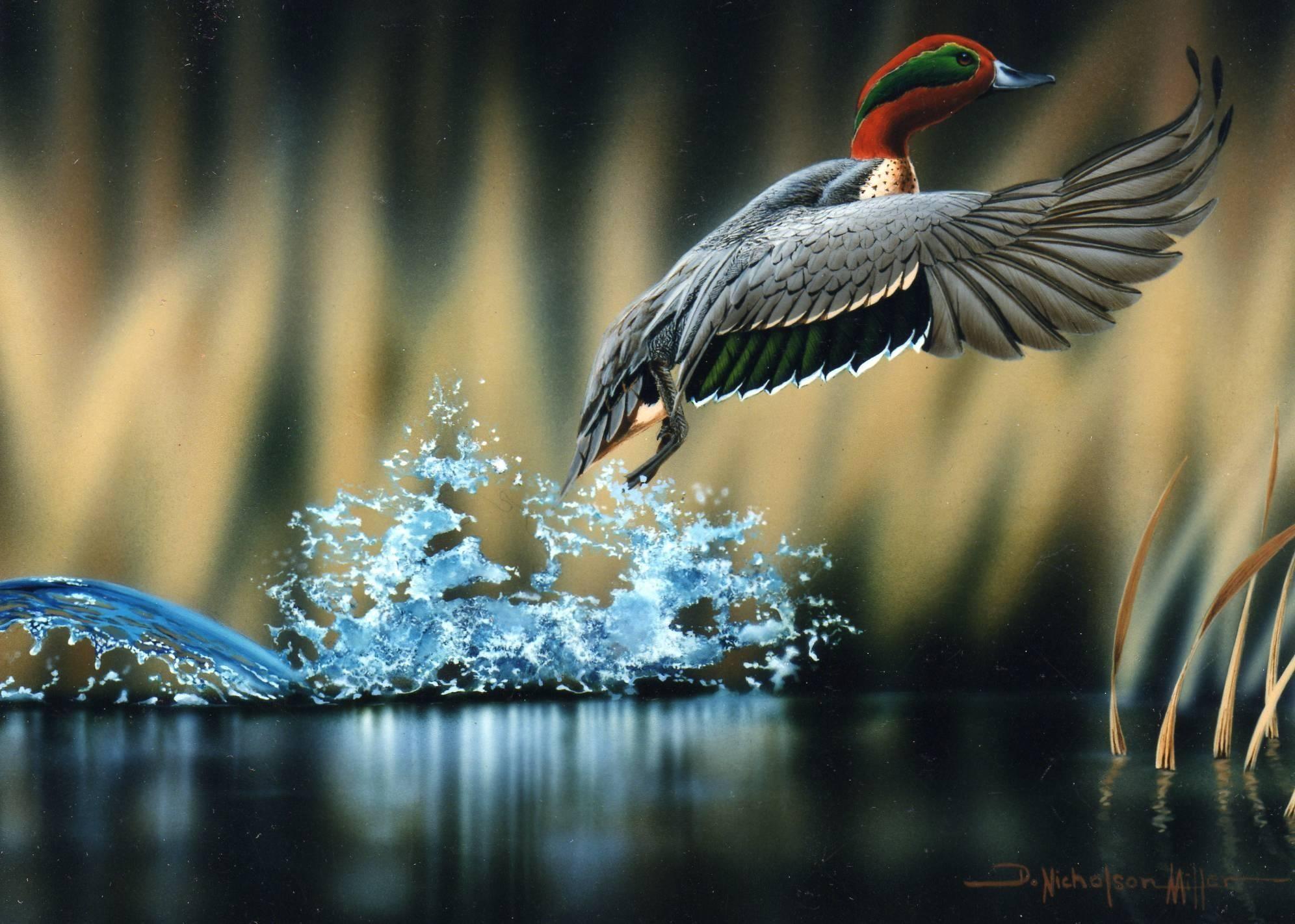 Hd Waterfowl Wallpaper Data Src Amazing Wildlife Photography 1992x1422 Download Hd Wallpaper Wallpapertip
